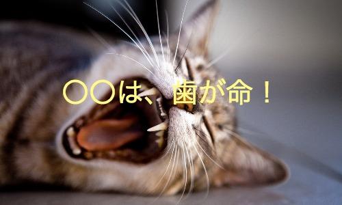 【歯周病予防】歯磨き家電のコスパが半端ない件